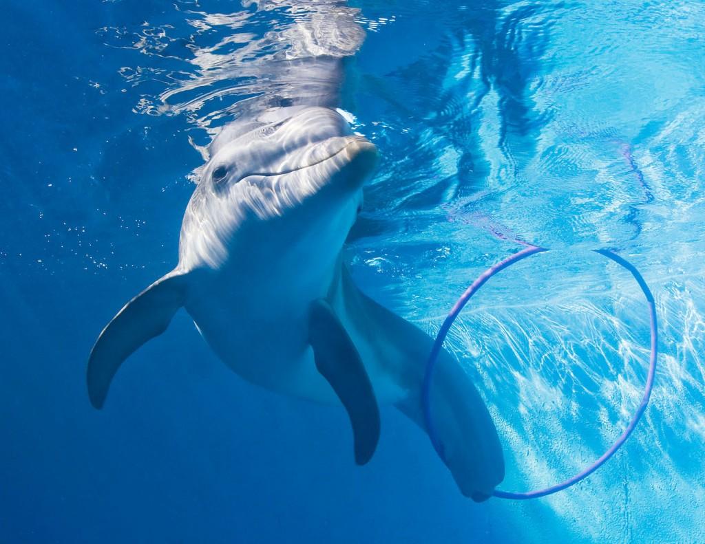 Winter With Hoola Hoop | Clearwater Aquarium