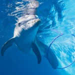 Winter With Hoola Hoop | Clearwater Aquarium